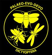 Logo Dictyoptera Hörnig