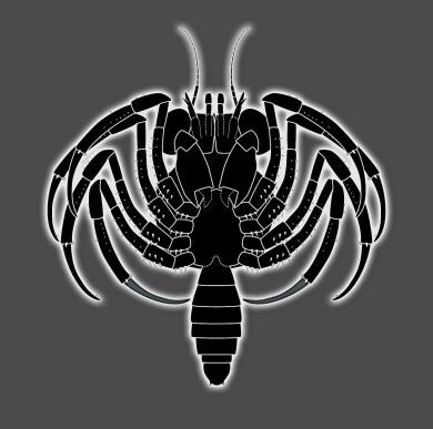 Älteste Krabbenlarve (Brachyura)